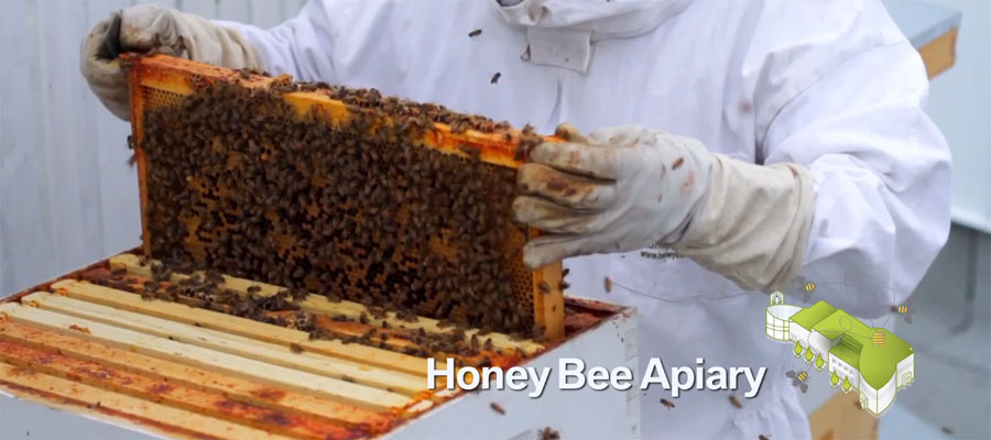 Honey-Bee-Apiary-Auto-West-BMW